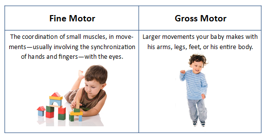 Developing fine motor skills through play lincoln park for Fine and gross motor skills activities