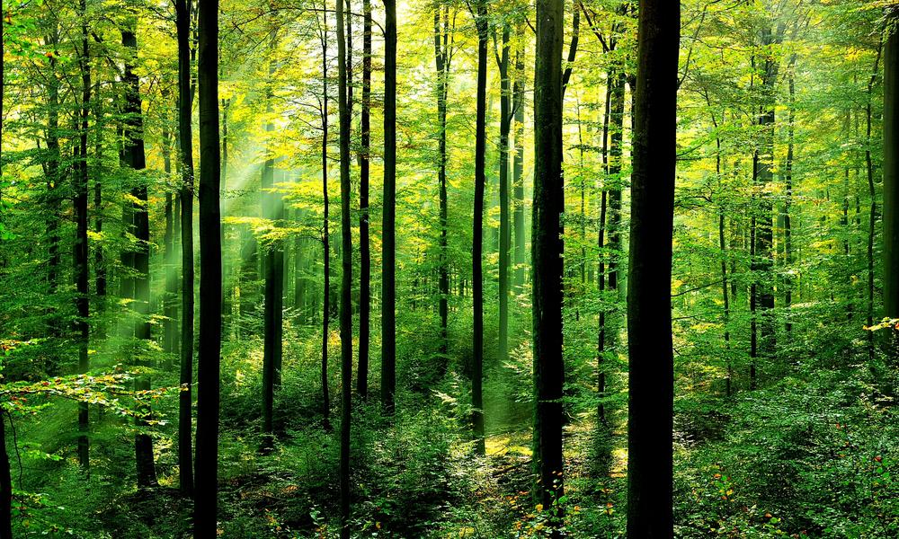 forests-why-matter_63516847.jpg