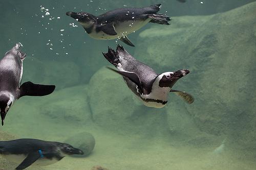 Penguin.jpg