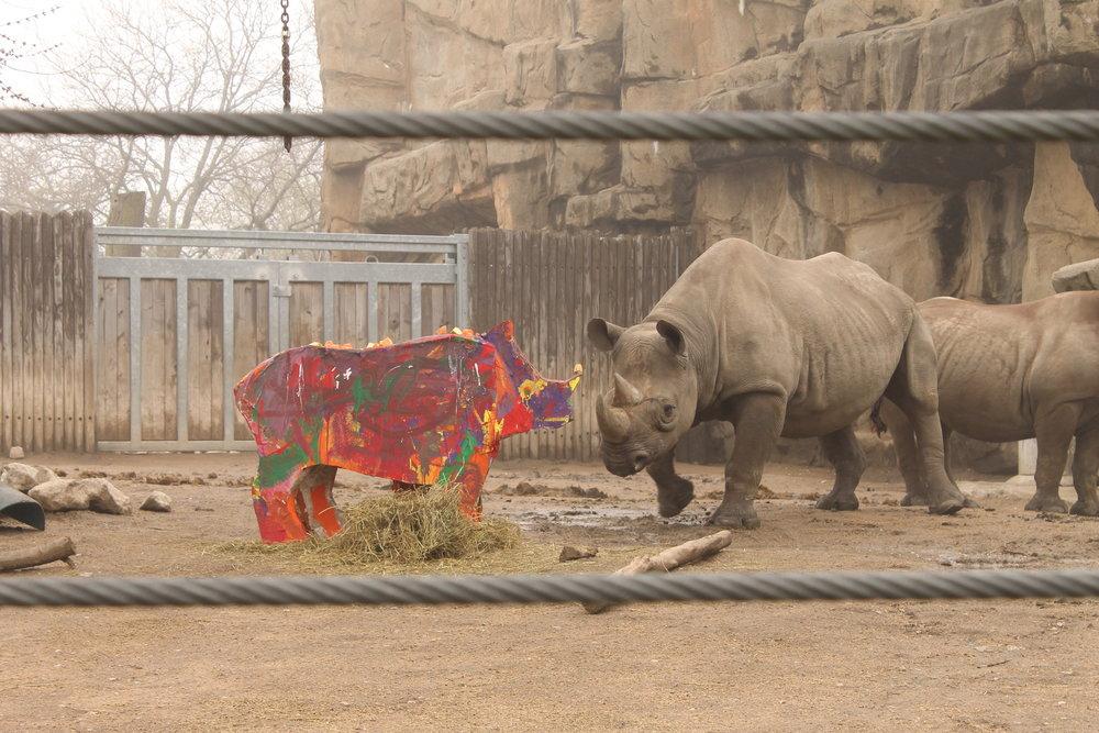 Cinco de Rhino 029.JPG