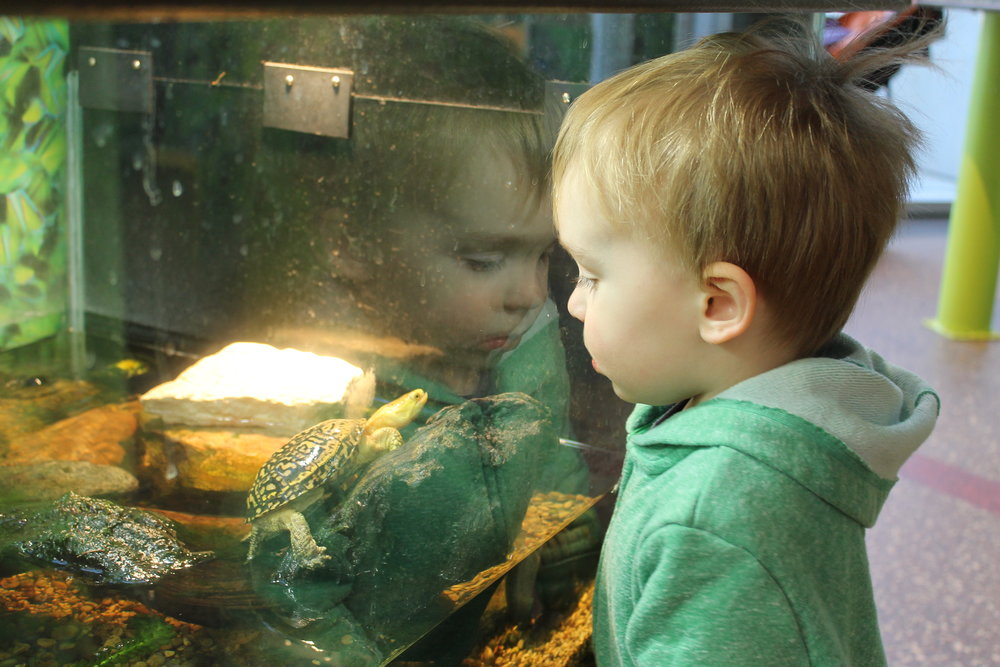 Observing animals- CZ.JPG