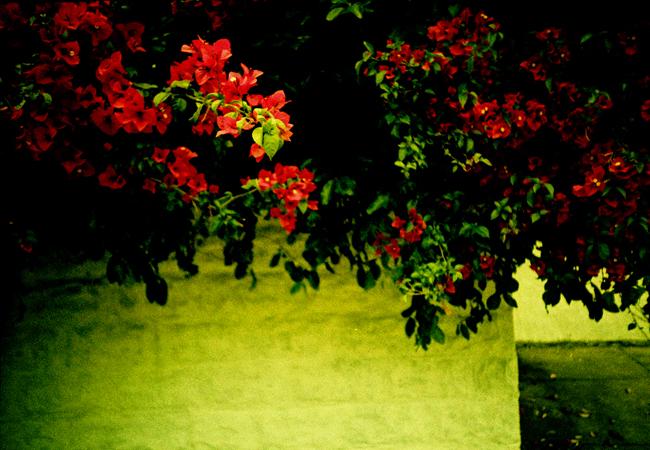 nola.lomo2012.03_0031.jpg