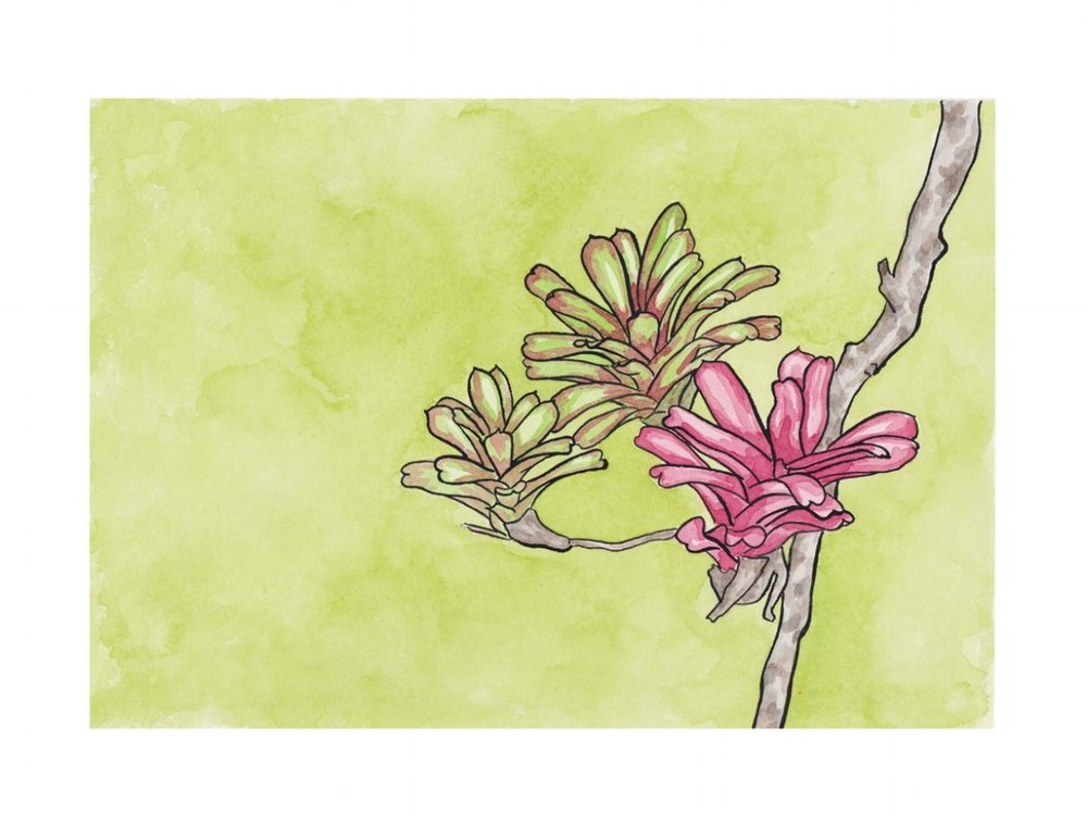 Bromélia na Bahia. Acrylic Ink. 2018.