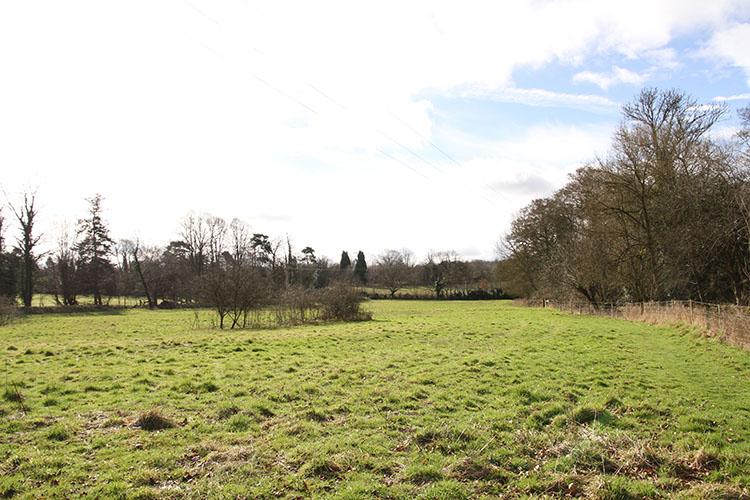 field2a.jpg