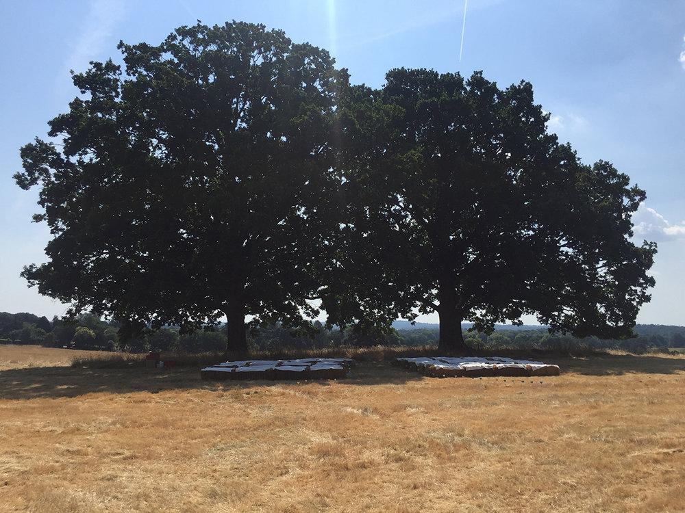outdoor-ceremony-trees-fiesta-fields-s.jpg