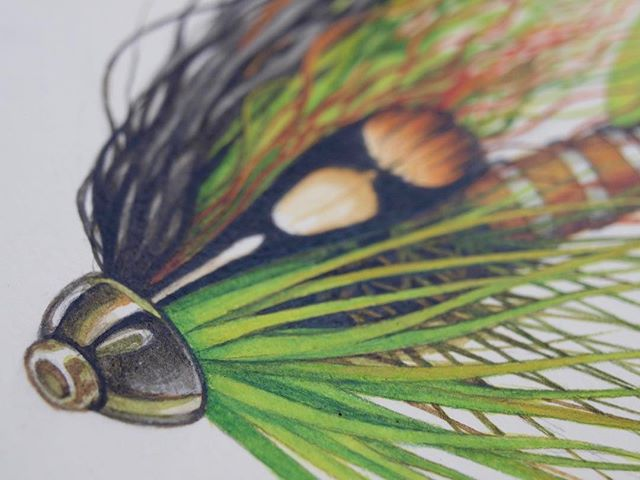 Details of the recent Scandi Painting. The brush strokes turning into small hackle fibers and fox hair fibers are my favorite.  ___________________ @topsalmonflies  #scandifly  #scandi #spey  #speyfly  #flytying  #flyfishing  #watercolor #artwork #painting  #robbenigno