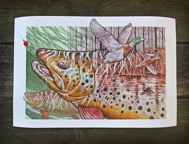 Got a print made up of this drawing from year or so back. Perfect timing for the incoming fall weather, itll make a good wall piece for the new owner.  #robbenigno  #trout  #brooktrout  #mallard  #duckhunting  #flyfishing  #fishing  #watercolor  #artwork  #illustration