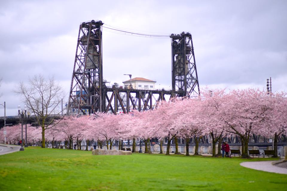 """""""We are loving these Cherry Blossoms in downtown Portland. Springtime in the Pacific NW. Snap by  Mitch Wilson Photography .""""  -Travel Portland"""