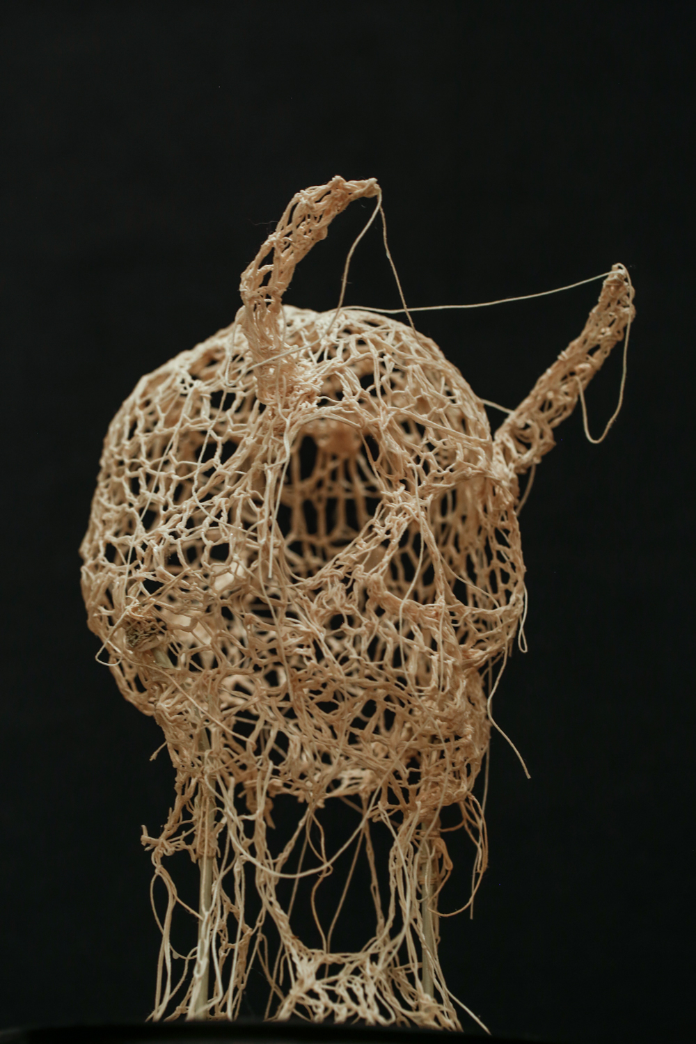 Caitlin McCormack is a fiber sculptor and illustrator. Her work primarily involves crocheted and stiffened cotton thread, which is positioned in the form of animal and humanoid skeletons, but she's currently trying out lots of new stuff. She has been based in Philadelphia for over ten years and receives representation from Paradigm Gallery + Studio.   website:    www.caitlintmccormack.com