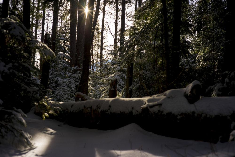WinterMDAM_002.JPG