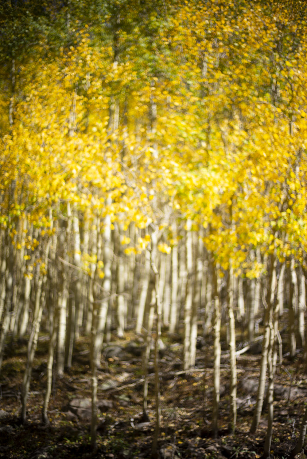 201809_SANTAFE_FallTrees_004.jpg