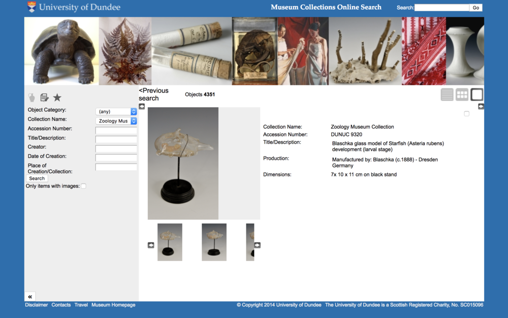 Blaschka glass_starfish-zoology Dundee.png