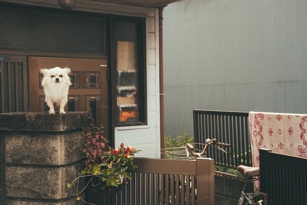 Tokyo-5131.jpg