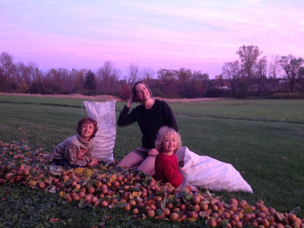 Family helpers harvesting apples from a wild seedling russet apple tree.