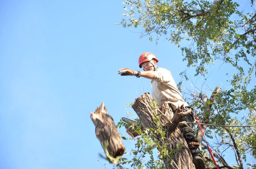 arborist and tree service and tree service lincoln nebraska.jpg