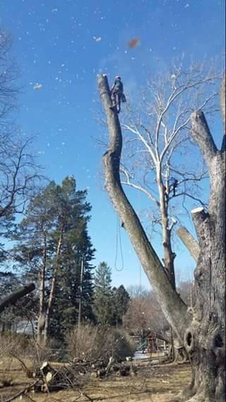 arborist lincoln nebraska.jpg