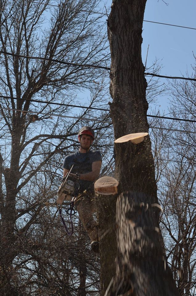 arborist tree lincoln nebraska.jpg