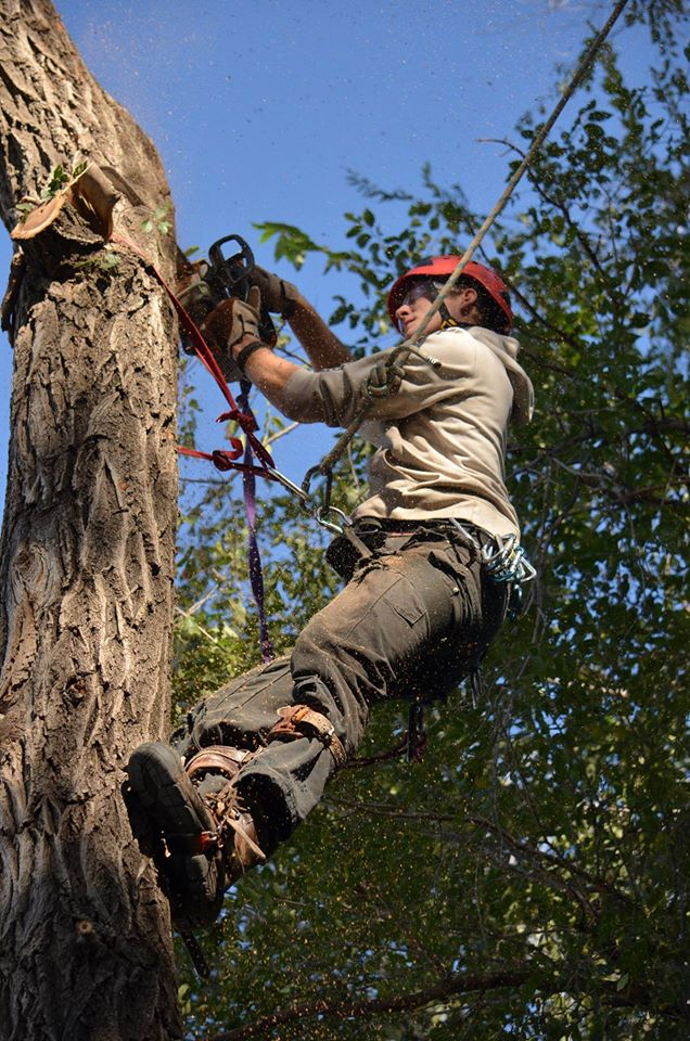 lincoln ne based tree service.jpg