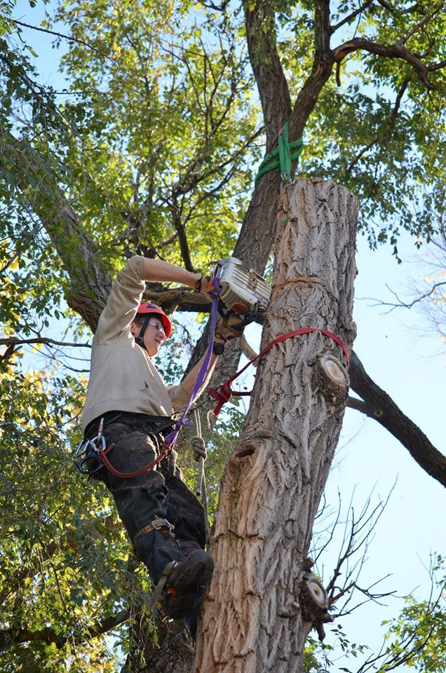 one life tree service in lincoln, ne.jpg