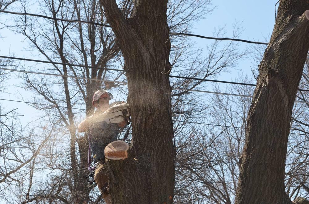 tree service arborist lincoln.jpg