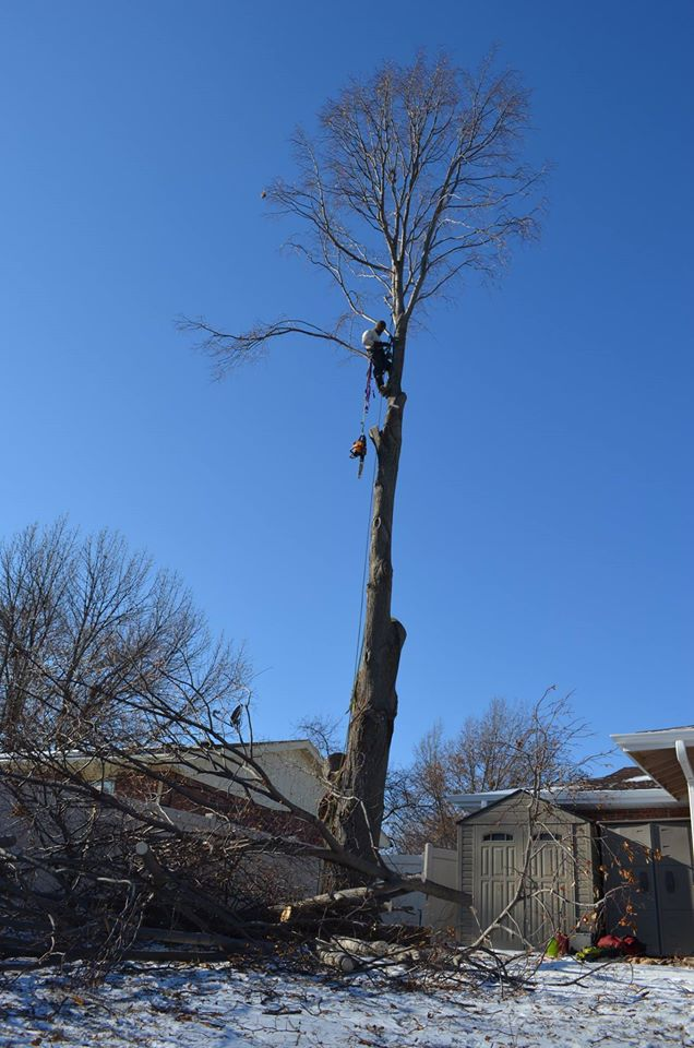 tree service in nebraska in lincoln.jpg