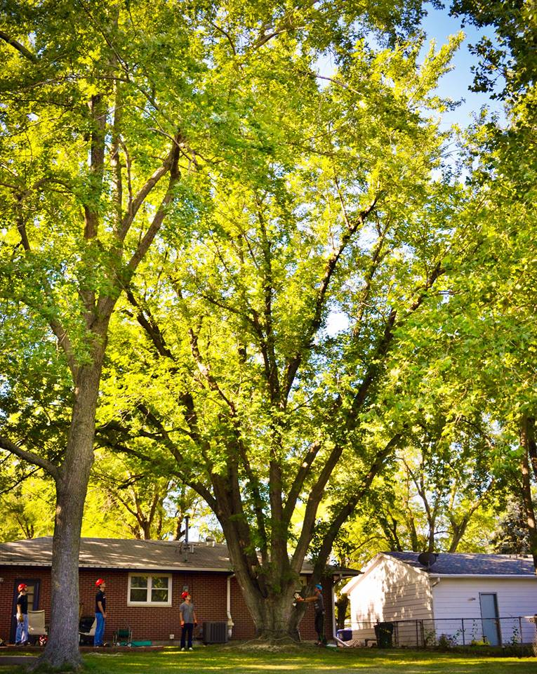 tree service of lincoln nebraska.jpg