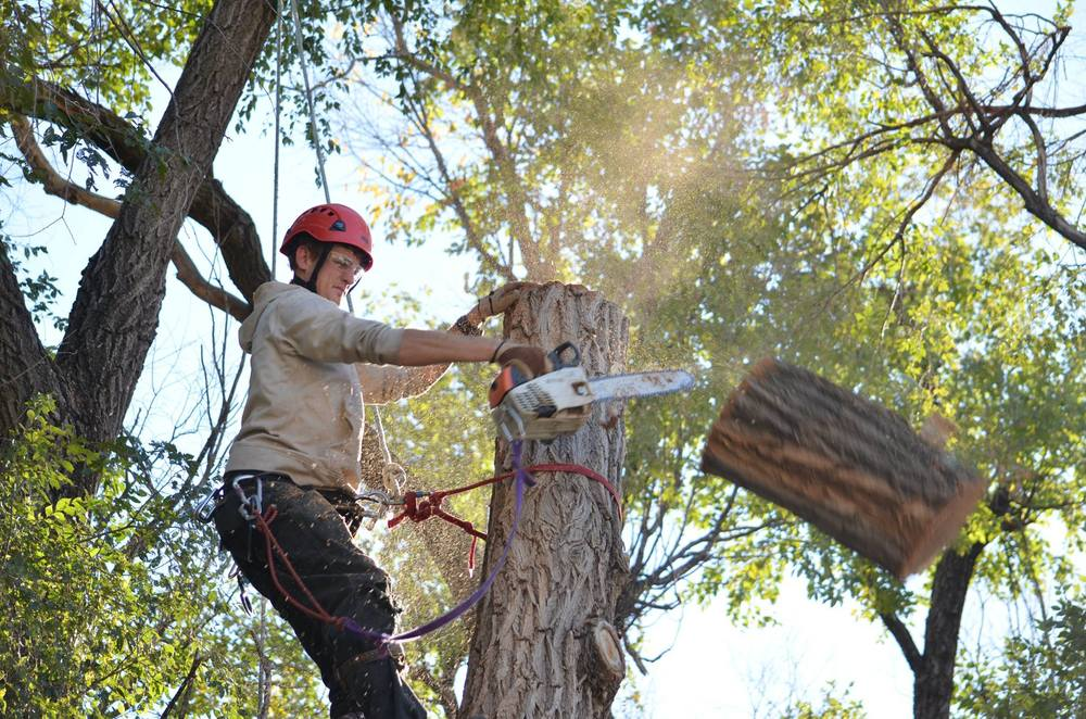 tree trimming in lincoln nebraska.jpg