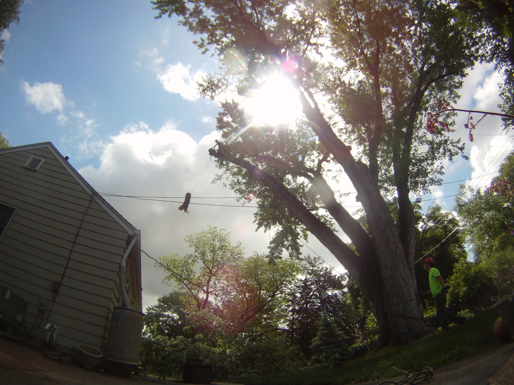 Tree Service In Lincoln Area Licensed Tree Arborist.JPG