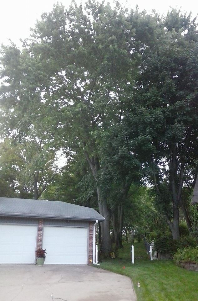 tree arborist videos lincoln life service photo ne one and in trimming photos nebraska