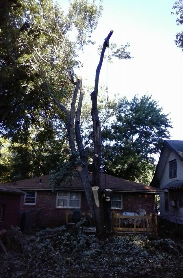 Tree Service in lincoln NE 68462.jpg