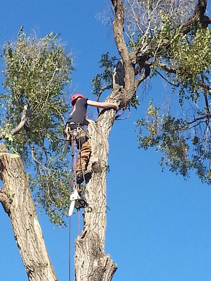 Tree service lincoln nebraska elm 7.jpg