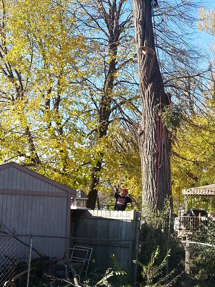 Lincoln Tree service Elm 2.jpg