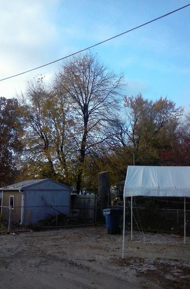 Tree Elm 2.jpg