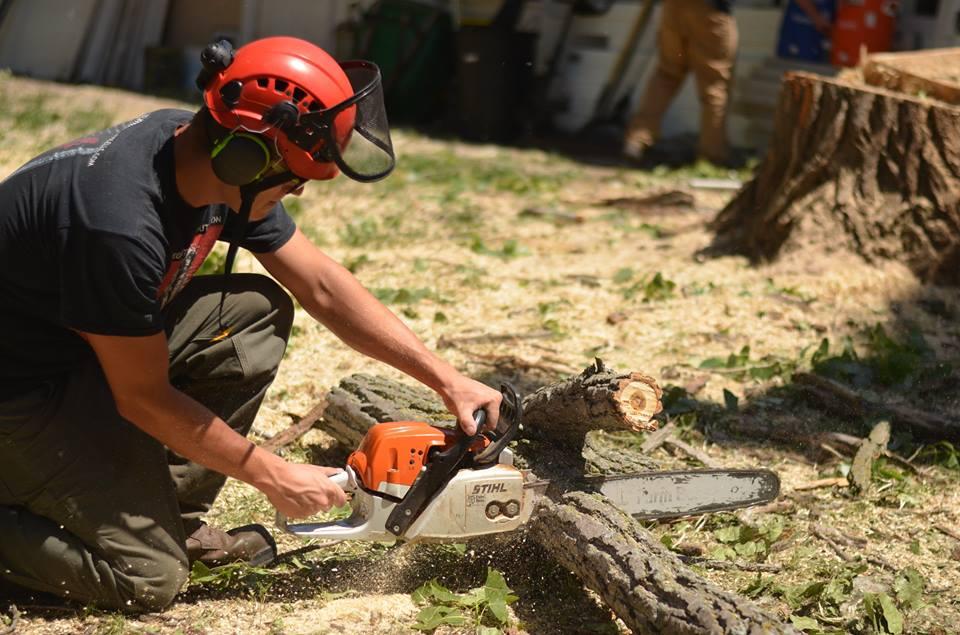 tree service lincoln arborist service 199.jpg