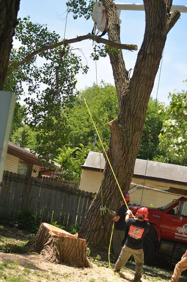 tree service lincoln arborist service 331.jpg