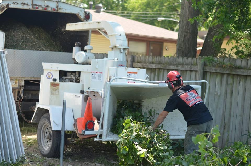 tree service lincoln arborist service 9991.jpg