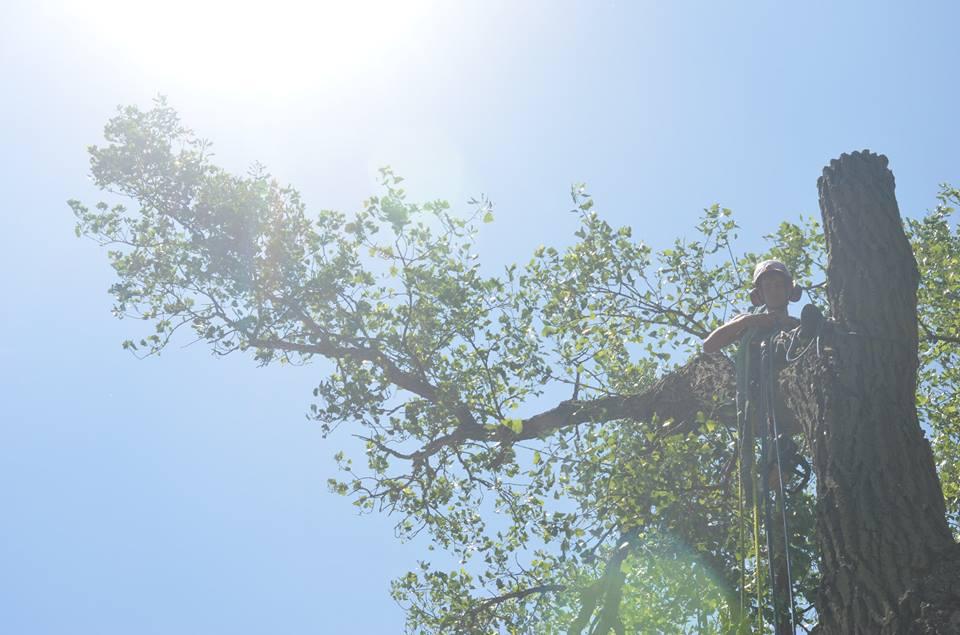 tree service lincoln arborist service 17867.jpg