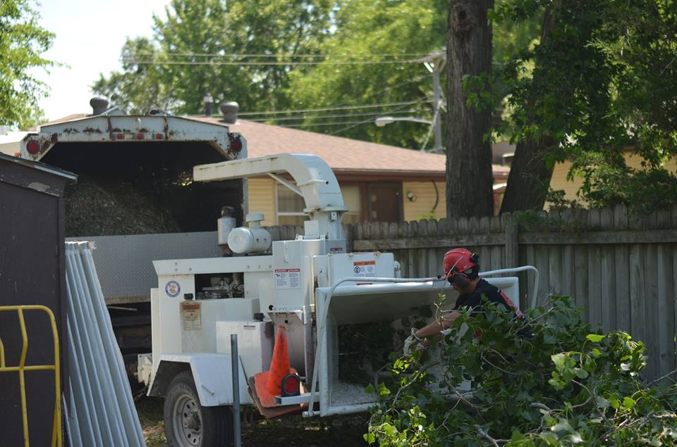 tree service lincoln arborist service 152267.jpg