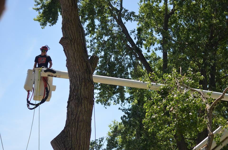 tree service lincoln arborist service 168900.jpg
