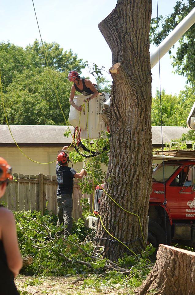 tree service lincoln arborist service 167655.jpg