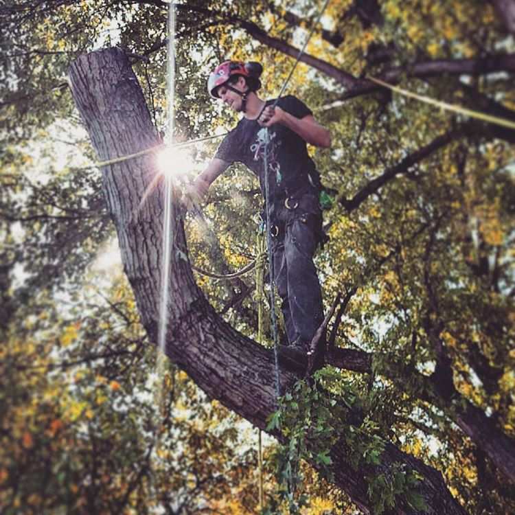 One Life Tree Service Amon Vanderlinden.jpg