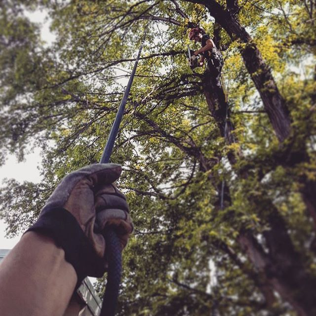 One Life Tree Service Amon Vanderlinden7.jpg