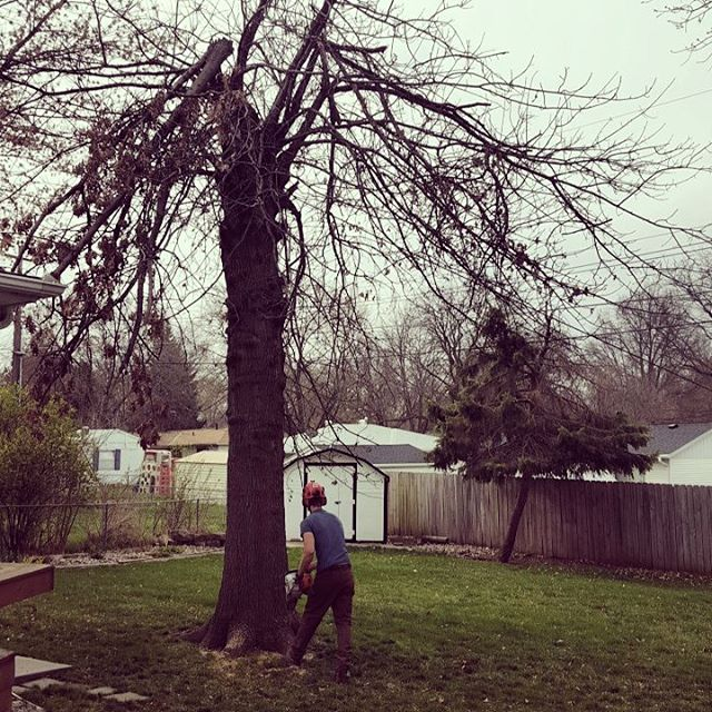 One Life Tree Service Amon Vanderlinden13.jpg