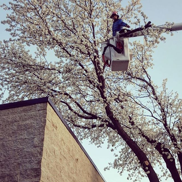 One Life Tree Service Amon Vanderlinden12.jpg