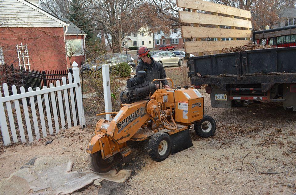 Stump grinding lincoln nebraska.jpg