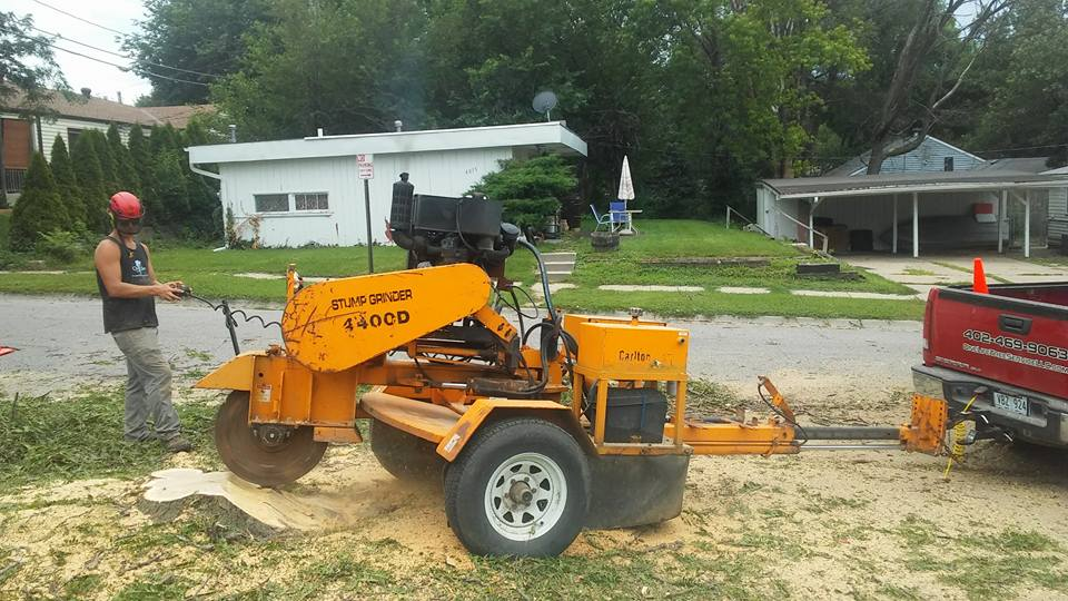 Stump grinding lincoln ne arborist.jpg
