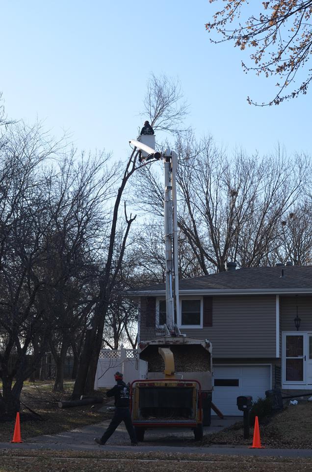 tree service lincoln ne 8.jpg