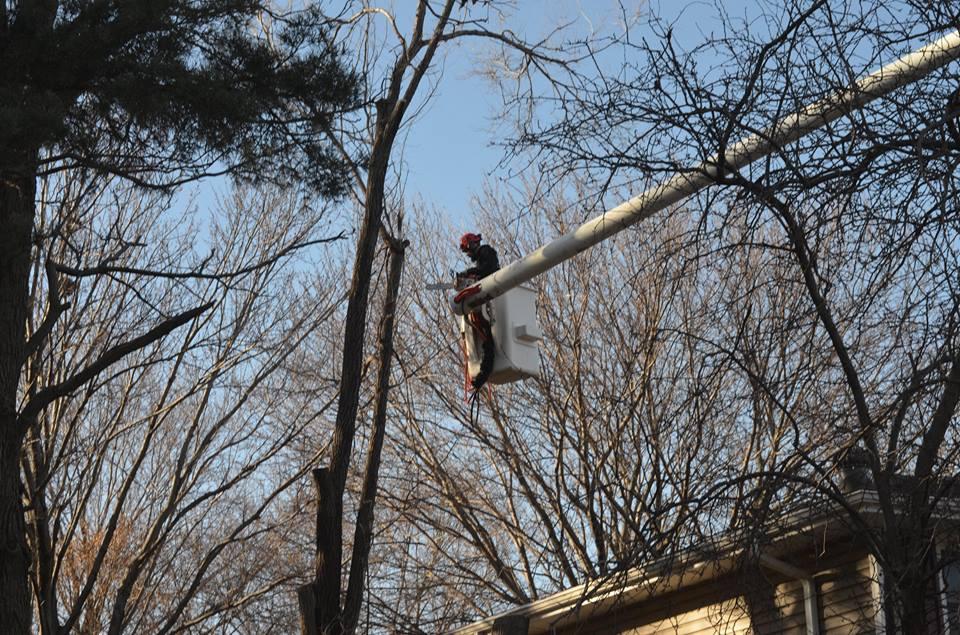 tree service lincoln ne 11.jpg