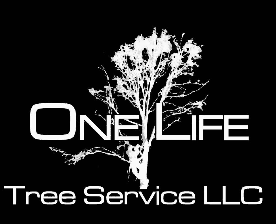 life lincoln trimming nebraska one service arborist ne tree