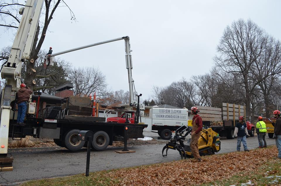 Best Tree Service In Lincoln Nebraska 7.jpg